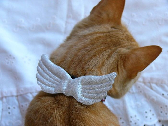 My angel cat collar accessory