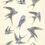 Bird Art Prints SALE set of three bird prints