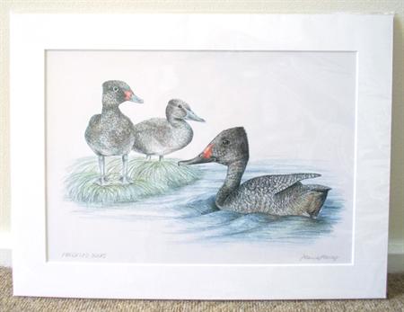 "Freckled Ducks 12""x 8"" Print Australian wildlife wall art with matt frame board"