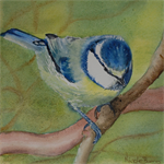 FREE Shipping, Framed, Original Watercolour Painting, Bird Blue Tit 28cmx28cm