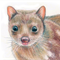 """Spotted-tail Tiger Quoll 12""""x 8"""" Wildlife Art Print"""