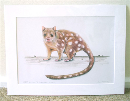 "Spotted-tail Tiger Quoll 12""x 8"" Wildlife Art Print"
