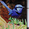 Splendid Blue Fairy Wren Notepad with pen