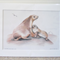 "Australian Sea Lions 12""x 8"" Wildlife Art Print"