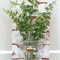 Wall Sconce - Old Brick