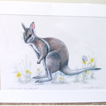 "Bridled nail-tail wallaby 12""x 8"" Wildlife Art Print"