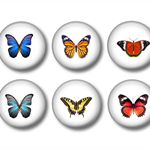 Magnet set of 6 fridge magnets  - Butterflies