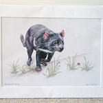 "Tasmanian Devil 12""x 8"" Print Australian wildlife wall art with matt frame board"