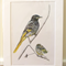 "Regent Honeyeater 12""x 8"" Wildlife Art Print - Australian bird with baby chick"