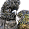 "Red-tailed Black-cockatoo pair, 12""x 8"" Wildlife Art Print"
