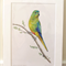 "Orange-bellied parrot 12""x 8"" Wildlife Art Print - endangered Australian bird"