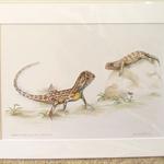 """Grassland earless dragons 12""""x 8"""" Print Australian wildlife wall art matt frame"""