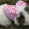 Custom made harness with bow on the back and matching leash for your guinea pig