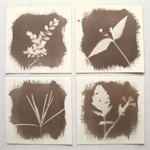 Botanical Art Print Set 4x4 Original Nature Pictures - Light Brown and White