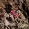 Red Polymer Clay & Felt Flower Post/Stud Earrings