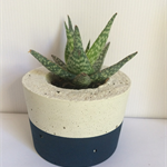 Single Concrete Planter / Candle Holder - CUSTOM COLOURS AVAILABLE