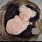 Teddy Bear Set Photo Prop for Newborn