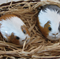 Handpainted guinea pig on river rock