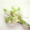 Floral Photographic Art Print - Posey -