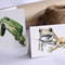 4 Gift Cards Mini size - Frogs (reptiles, Green & Gold Frog, Spotted Tree Frog)