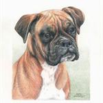 Pet Portraits in Colour,  dog, cat, bird, illustration