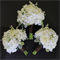 White Delight Bouquet Package