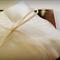 Cherish - Wedding Ring Pillow