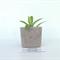 Customised Concrete Succulent Planter - Urban Decor