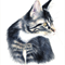 cat illustration - animal art - cat drawing - pet portrait