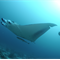 H1: Manta Project by Malcolm Ludgate ACS UN FRAMED