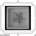 Star Fish Boxed Frame Picture