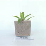 Concrete Succulent Planter - Urban Decor