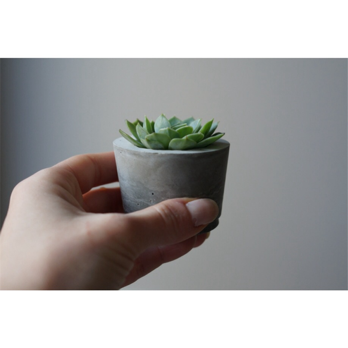 Mini Concrete Planters : Mini concrete planter set of belushi handmade madeit