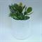 Modern White plant pot / Mistletoe design succulent planter / patterned ceramic