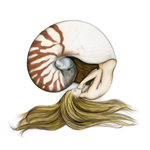 Nautilus Shell Mermaid Art Print Colour Pencil Drawing Tattoo 8x10