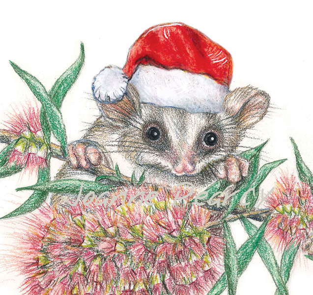 Christmas Card with Feathertail Gliders, bottle brush flowers ...