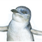 Little Penguin greeting card Australian wildlife art pencil drawing beach family