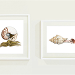 Set of 2 Nautilus & Triton Shell Mermaid Art Prints 8x10