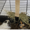 Hay holder for your  rabbit , guineapig or small pet .
