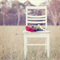 """Photographic Art Print - Chair of Roses - 5x5"""""""