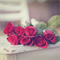 """Photographic Art Print - Roses are Red - 5x5"""" flowers floral decor"""