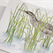 Australasian Bittern  greeting card Australian wildlife art, wetlands, hidden