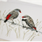 Diamond Firetail greeting card Australian finch bird wildlife art, red and spots