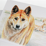Dingo greeting card Australian wildlife art, native dog, apex animal