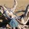 Soft Blue Sea Glass Starfish Bracelet