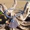 Purple Sea Glass Starfish Bracelet
