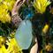 Blue Sea Glass Water Sprite