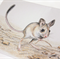 Dusky Hopping Mouse greeting card Australian wildlife art
