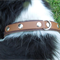 Brown and Black Leather Dog Collar with 2 D rings