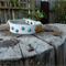 Yellow, White and Blue Small Dog Collar